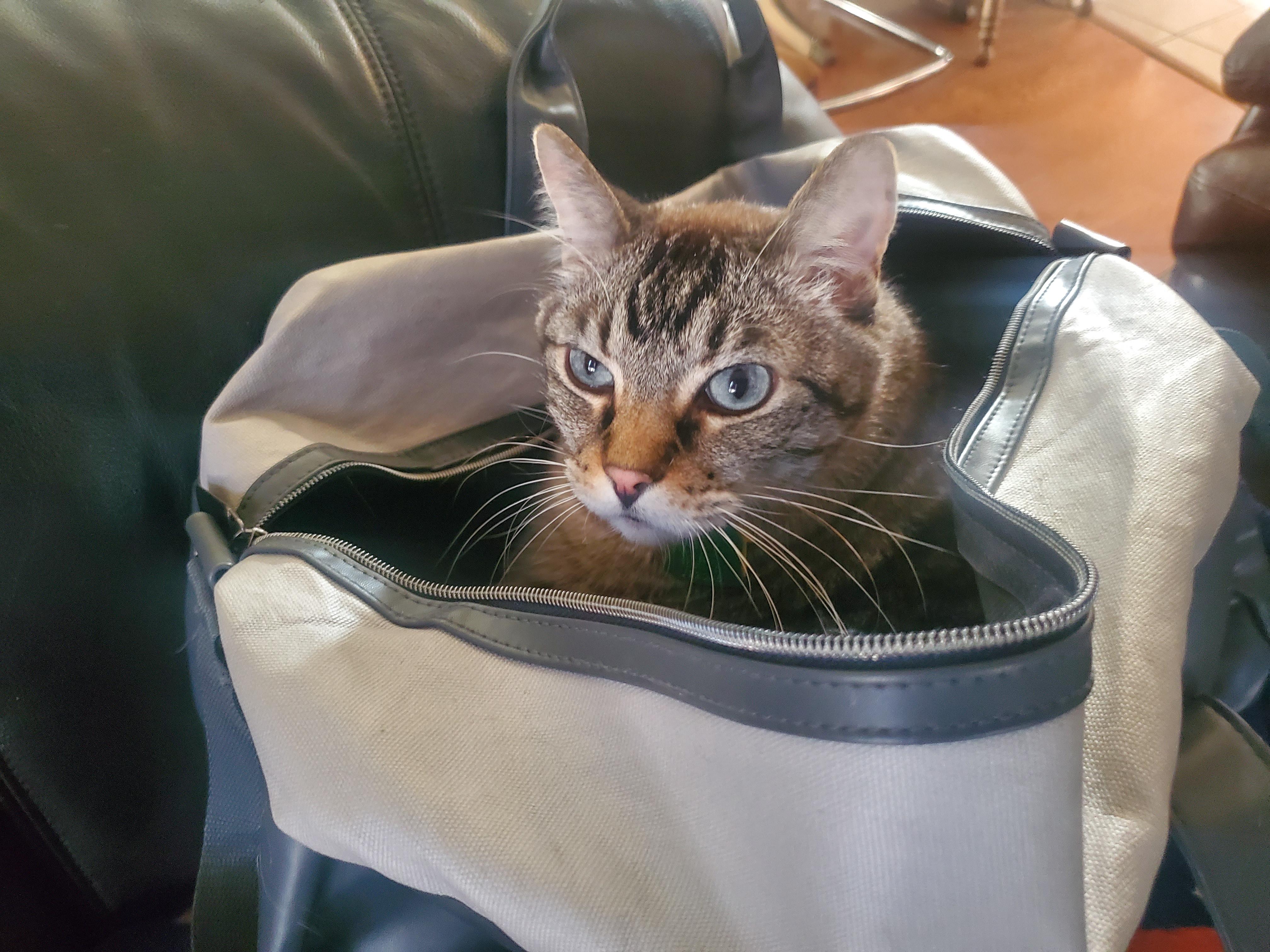 jynx bag